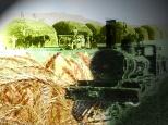 tren trigo galeses 3